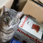 Pet Movers and Pet Moving Companies