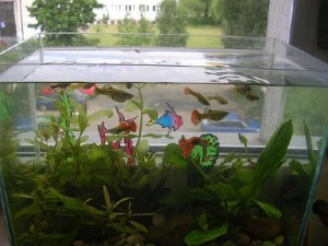 moving an aquarium