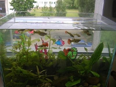 choosing-aquarium-equipment-2
