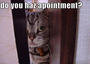 Appointment cat