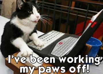 Busy kitten