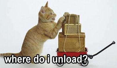 Kitty labor