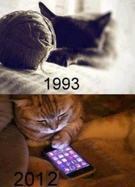 Modern kitty