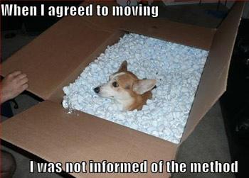 Moving dog