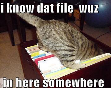 Organized kitty