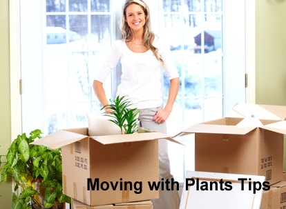 How to Move with Plants