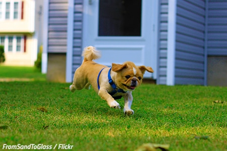 Help your pet adjust after the move