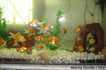 Is it ok to move a fish tank?