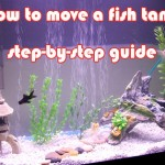 How to properly move a fish tank