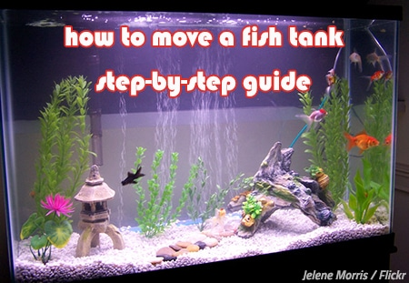 The best way to move a fish tank