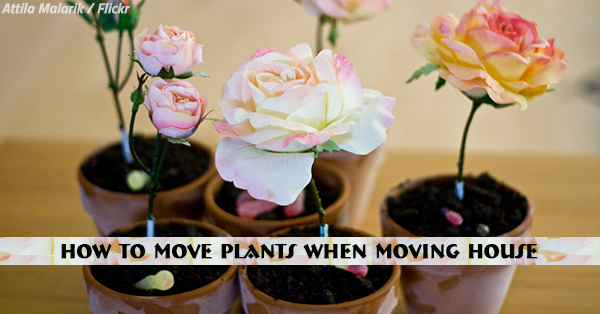How to Move Plants When Moving House