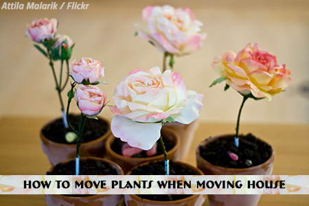 Moving house with plants