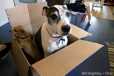 Moving with pets to another state