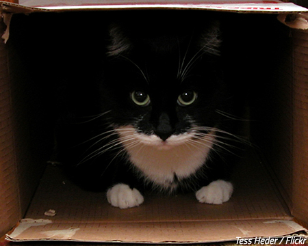 Moving a cat into a new home