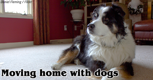 Moving Home with Dogs