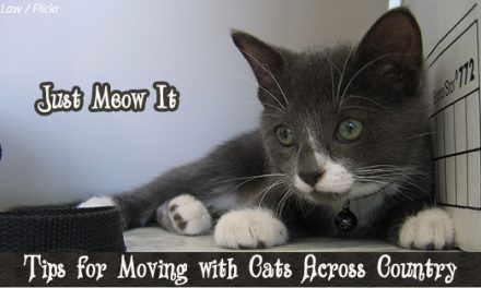 10 Tips for Moving with Cats Across Country: Just Meow It