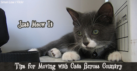 Tips for moving with cats across the country
